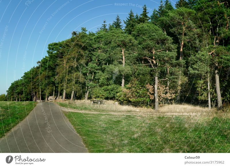 Plan trail with pine forest Nature Plant Animal Tree Forest Attentive Calm flatly Environment Promenade Jawbone trees Green Hesse Landscape off Direction