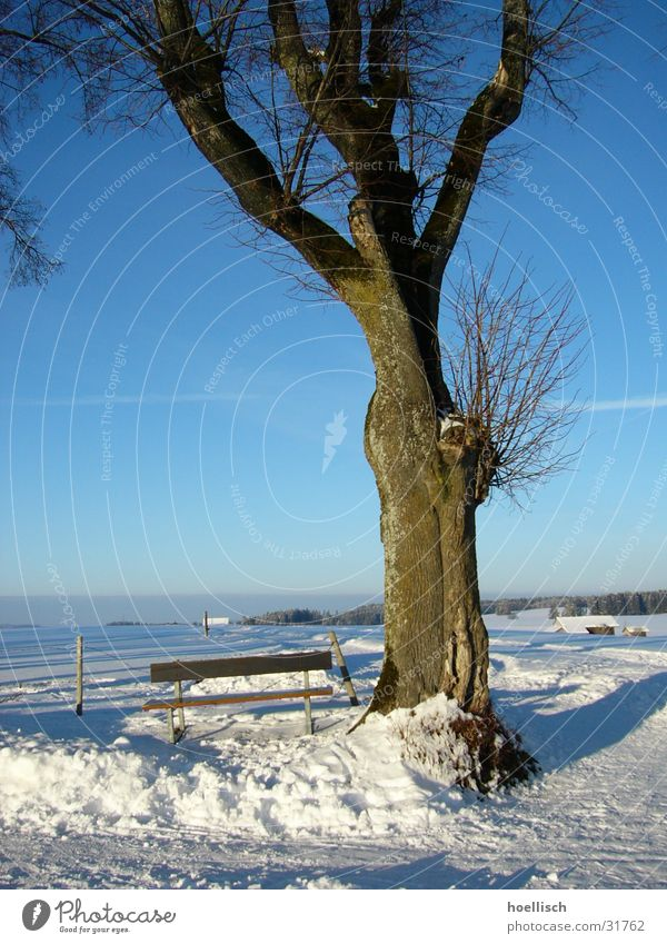 Sky Old Tree Sun Winter House (Residential Structure) Snow Mountain Bench Fence Hut Knot Allgäu Birch tree Headstrong