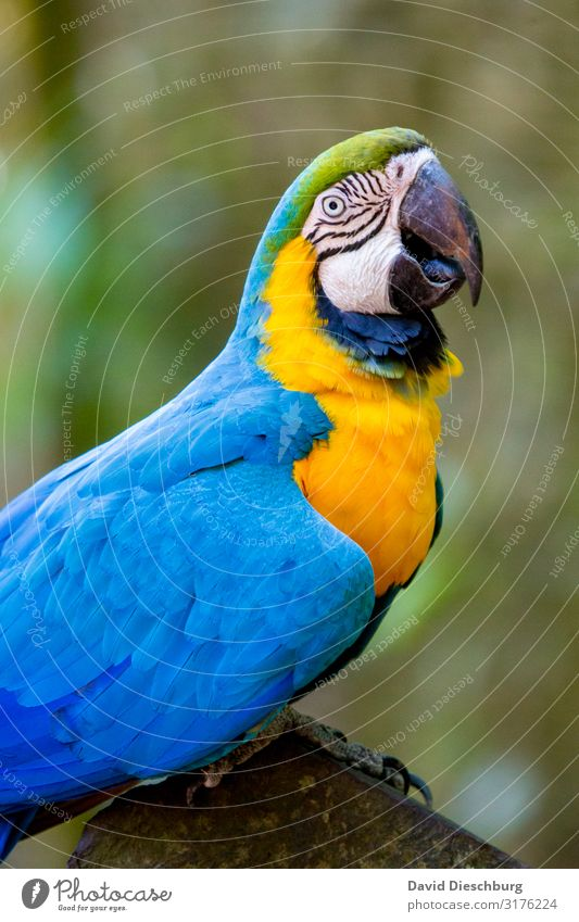 Vacation & Travel Nature Blue Beautiful Green White Animal Forest Yellow To talk Freedom Bird Wild animal Adventure Feather Beautiful weather
