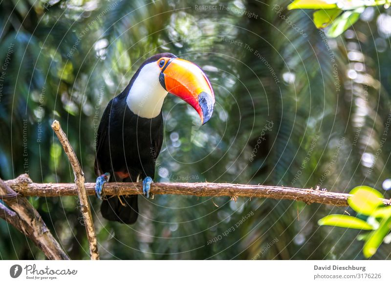 What are you looking at? Vacation & Travel Adventure Expedition Nature Beautiful weather Plant Tree Virgin forest Wild animal Bird 1 Animal Idyll