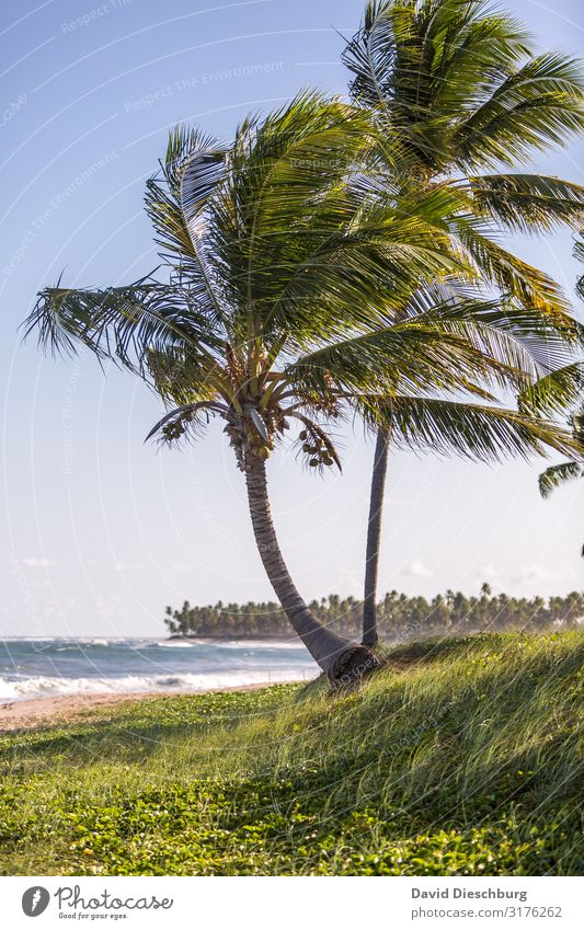 palm beach Vacation & Travel Tourism Adventure Far-off places Summer vacation Nature Landscape Plant Animal Cloudless sky Spring Beautiful weather Waves Coast