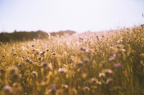Farewell and Welcome Environment Nature Landscape Plant Elements Blossom Wild plant Meadow Hill Fragrance Free Warmth Yellow Orange Joy Happy Happiness
