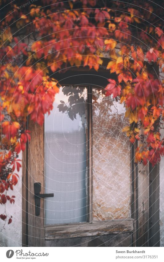 Nature Plant Red Tree House (Residential Structure) Leaf Window Architecture Autumn Wall (building) Environment Happy Building Garden Wall (barrier) Orange