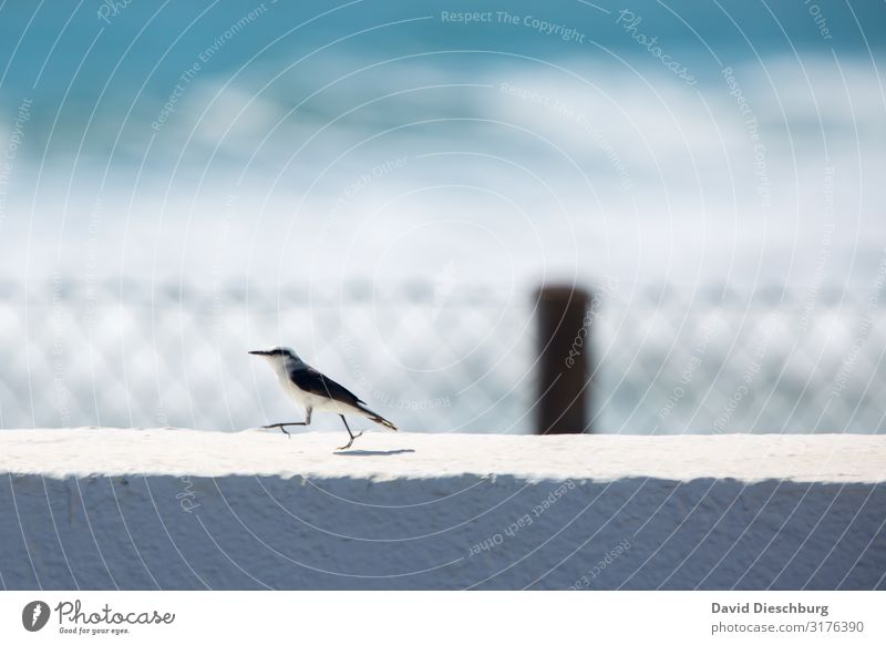 quickly away Vacation & Travel Summer vacation Nature Landscape Spring Beautiful weather Coast Ocean Animal Bird 1 Blue Gray Black White Movement Resolve Target