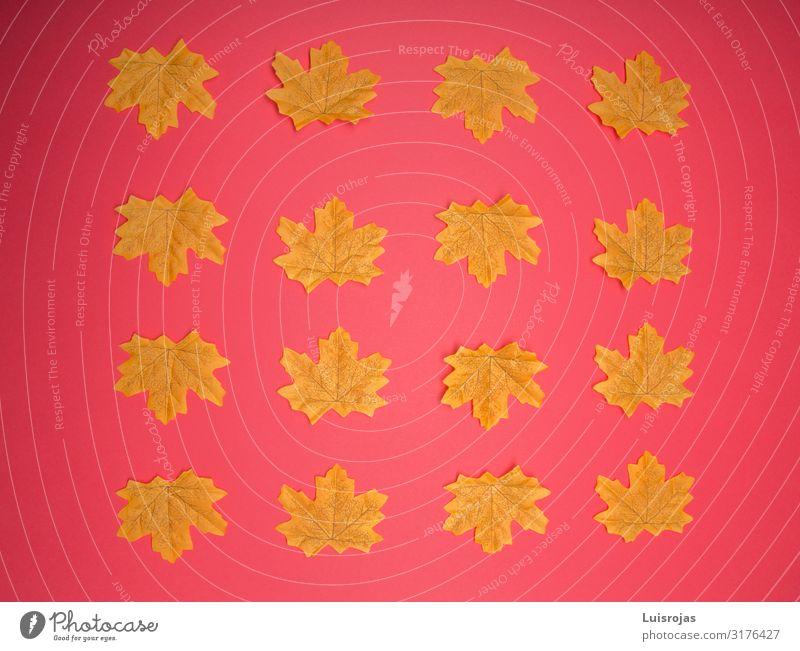 Yellow leaves on red background Design Autumn Warmth Leaf Piece of paper Stamp Package Red Background picture Colour photo Pattern Deserted