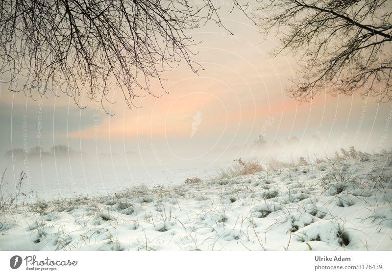 Sky Vacation & Travel Nature Christmas & Advent Landscape Winter Environment Snow Grass Moody Design Contentment Ice Fog Joie de vivre (Vitality) Climate