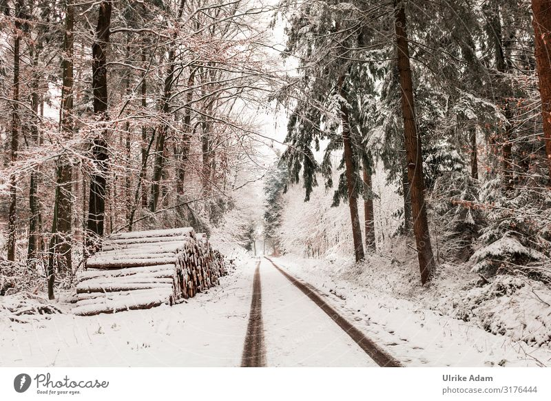 Snowy landscape forest Vacation & Travel Winter Winter vacation Hiking Wallpaper Christmas & Advent Nature Landscape Climate Climate change Ice Frost Tree