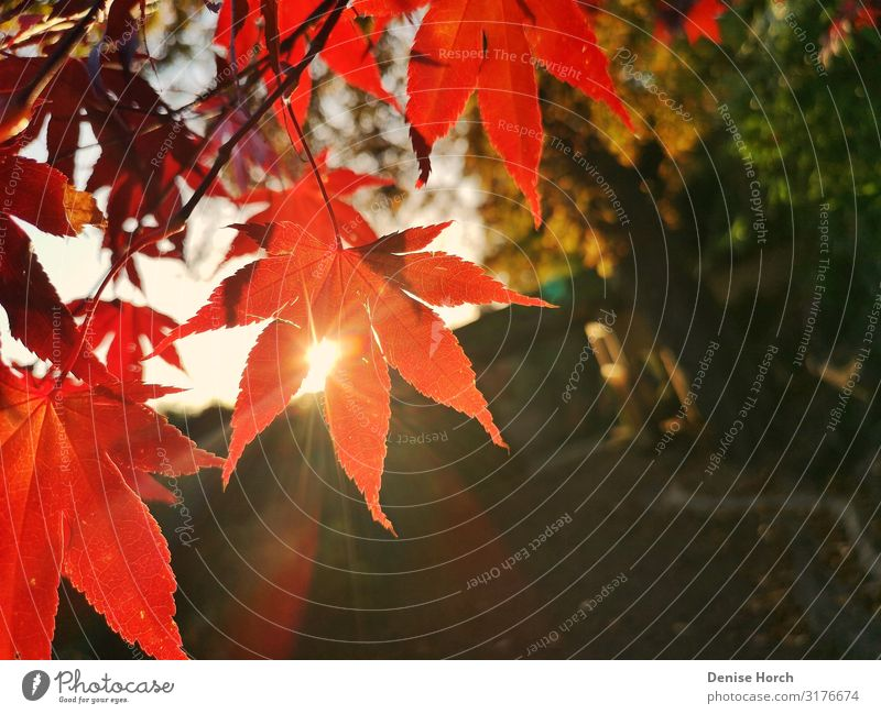 Leaf in the sunshine Plant Sun Sunlight Autumn Beautiful weather Tree Garden Deserted Observe Discover Relaxation To enjoy Crouch To talk Looking Dream