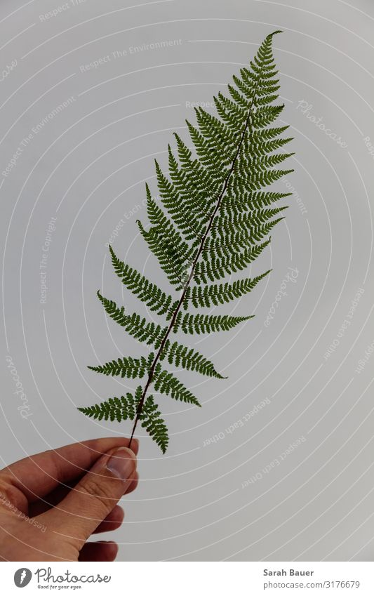 Green Perfection Decoration Hand Art Environment Nature Plant Fern Leaf Foliage plant Wild plant Forest Wall (barrier) Wall (building) Touch Carrying Esthetic