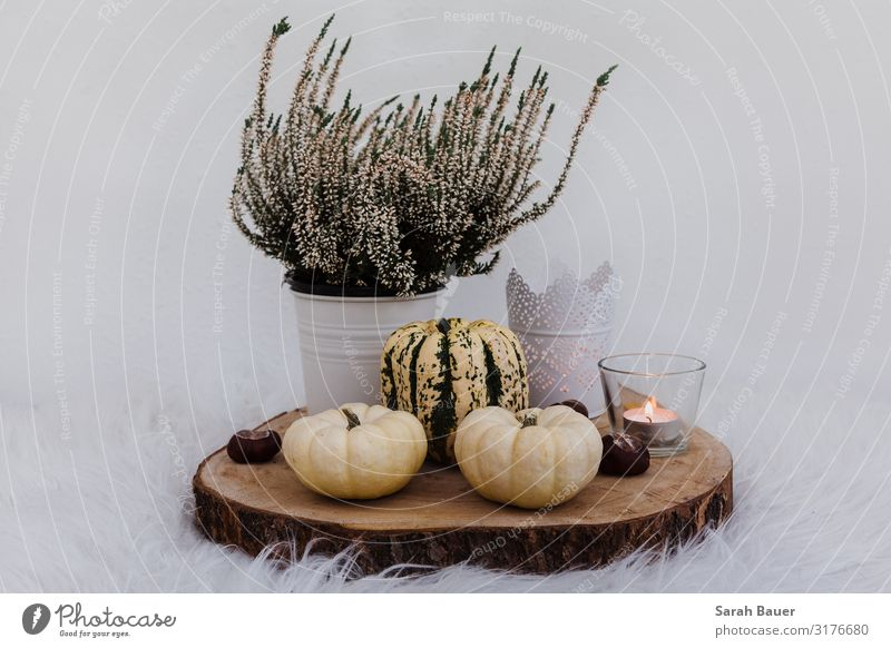 Autumnality Style Design Living or residing Flat (apartment) House (Residential Structure) Arrange Interior design Decoration Thanksgiving Christmas & Advent