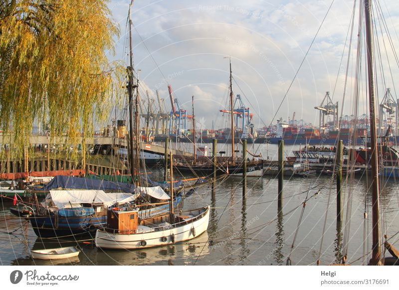 old ships in the museum harbour Övelgönne in Hamburg, in the background cranes of the container terminal in sunshine Environment Autumn Beautiful weather Tree