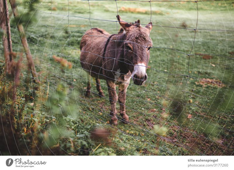 Cuckoo, Donkey! Plant Animal Farm animal Zoo Petting zoo 1 Observe Looking Wait Cold Natural Curiosity Cute Wild Green Peaceful Attentive Watchfulness Patient