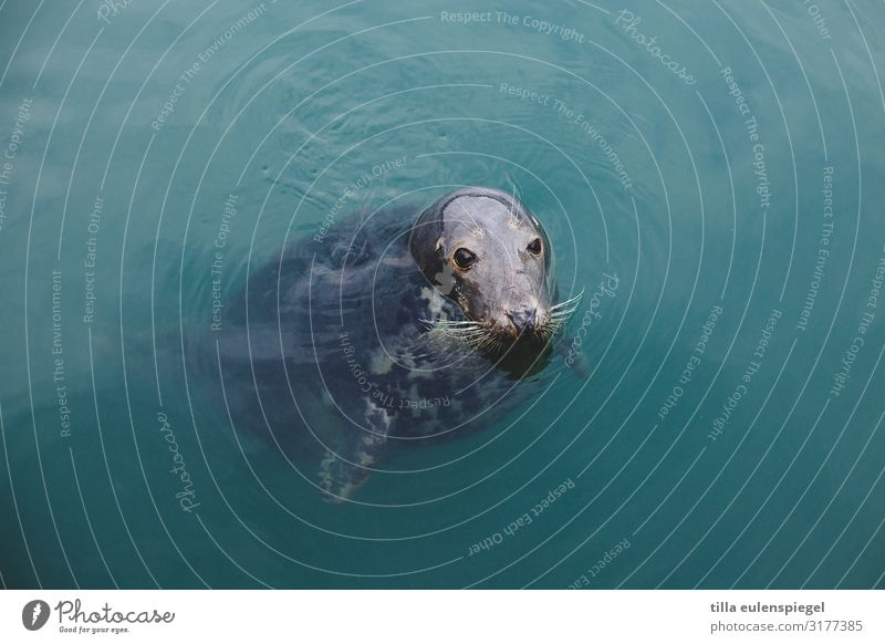 Hello! Water Animal Wild animal Animal face 1 Observe Cold Nature Seals Wait Float in the water Surface of water Curiosity Blue Cute Colour photo Exterior shot