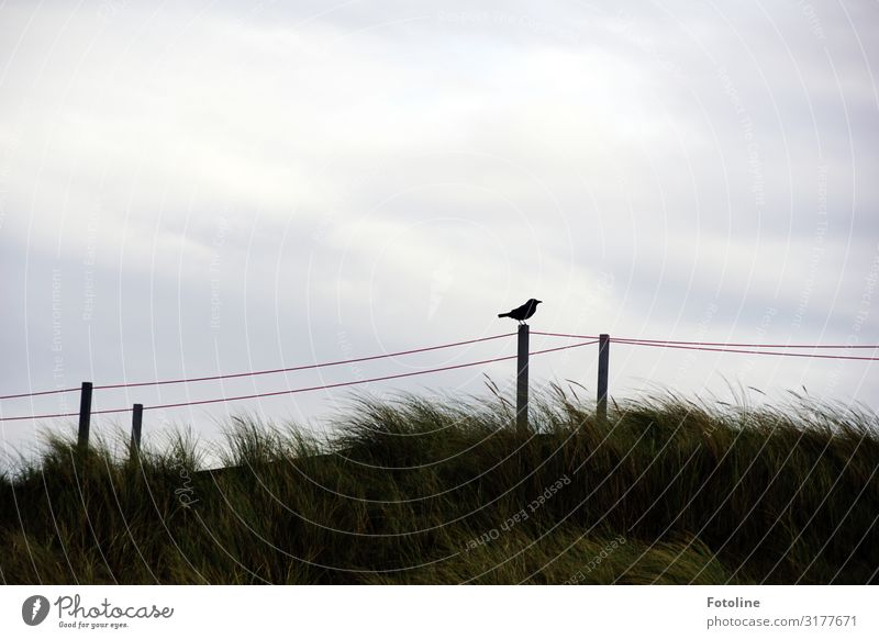 dune Environment Nature Landscape Plant Animal Sky Clouds Grass Coast Beach North Sea Island Wild animal Bird 1 Far-off places Free Bright Small Natural Gray