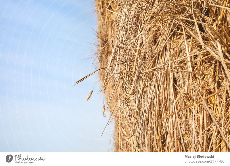 Close up picture of a haystack against the sky. Nature Sky Agricultural crop Yellow Gold Haystack animal feed agriculture Farm background Harvest Rural straw