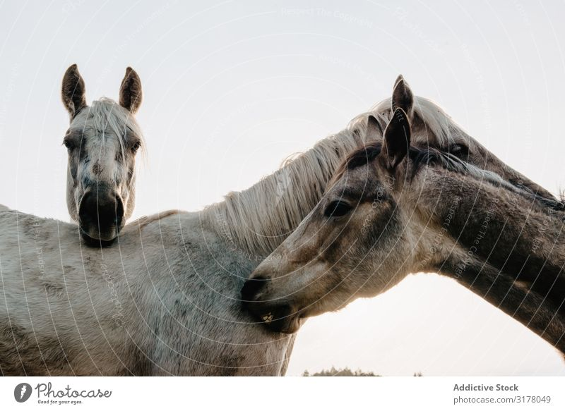 Funny horses on meadow Horse Meadow pasturing Field Tree Hill Clouds Sky Mountain Beautiful Mammal Animal equine Mane mare Breed Pony Domestic Head Heaven