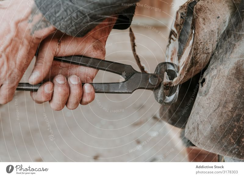 Man shoeing horse near stable Blacksmith Horseshoe Stable Ranch Hammer putting on Work and employment Hoof Tool Iron Animal farrier Equipment Profession skill