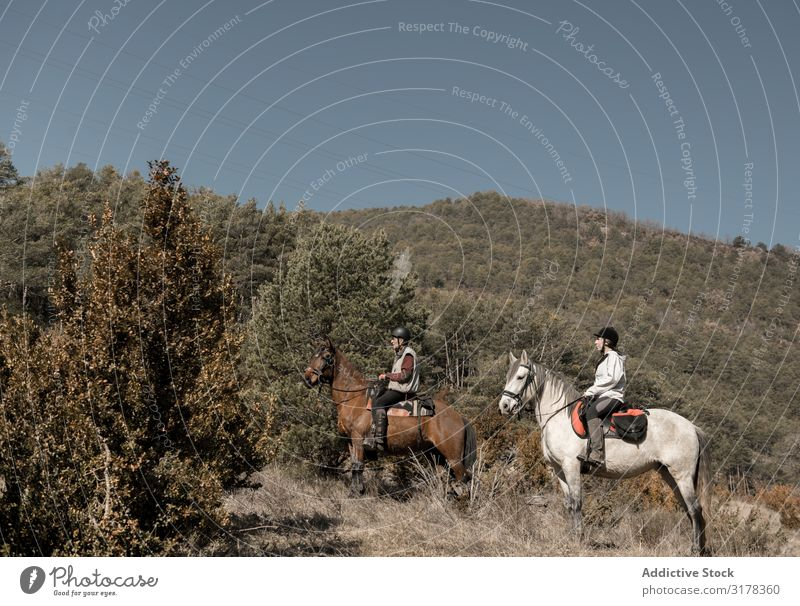 Anonymous people riding horses in brook Human being Horse Brook Landscape Autumn Lessons Horseback Water Calm Nature Sports equestrian Lifestyle Relaxation