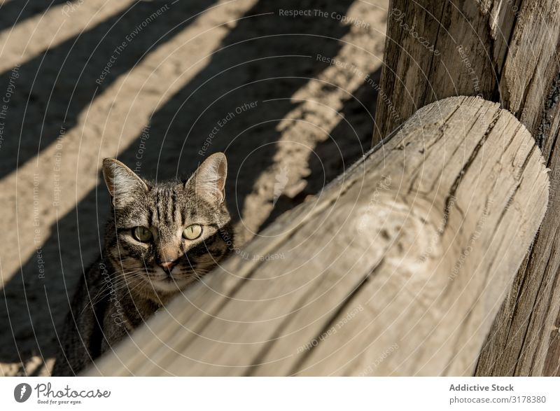 Cat near fence on ranch Fence Ranch Sunbeam Day Staring Landscape Striped Rural Mammal Pet Kitten Animal Cute Delightful Sweet furry Fluffy Harmonious Idyll