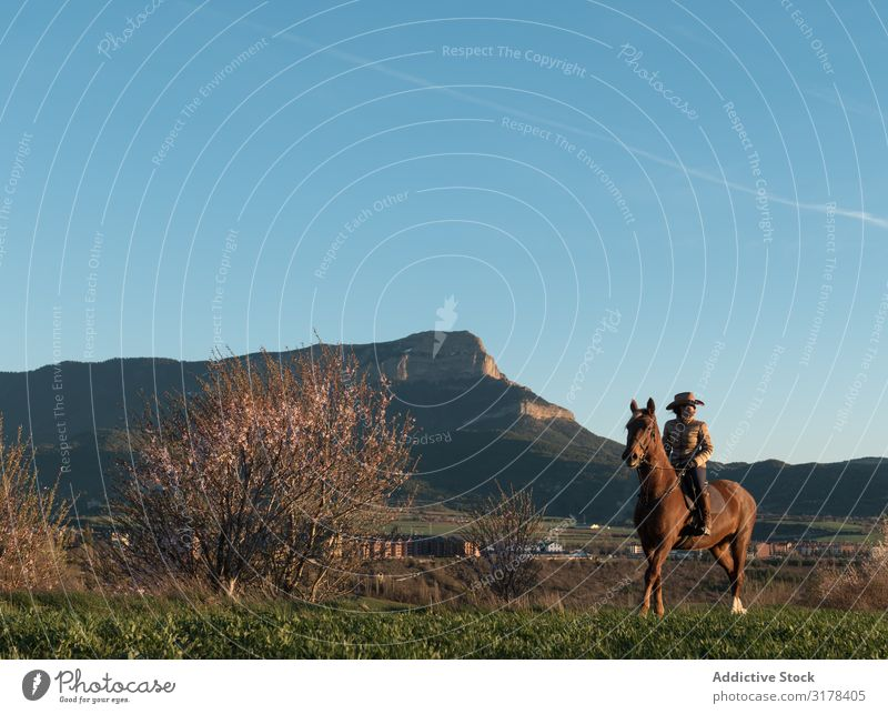 Woman on horse in field Horse Field Looking away Landscape Rider Nature Sky Beautiful weather Blue Sunbeam Day Lifestyle Leisure and hobbies Freedom