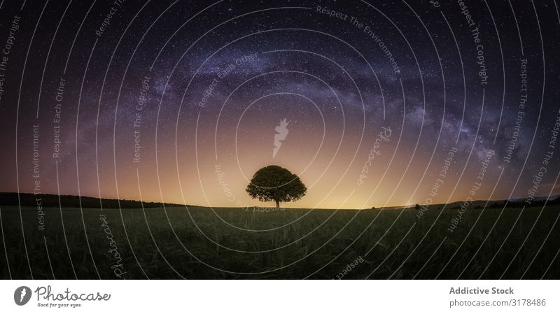 Dry tree in high grass under starry sky Tree Sky Landscape Night Grass Cosmos Earth Dark Bare Wild Wood Galaxy Nature Silhouette Universe Stars Picturesque