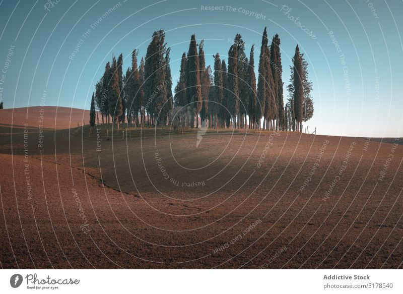 Small grove on empty dry field Field Italy Tree Tuscany Nature Landscape Summer Natural Organic Rural Environment Picturesque Farm Countries Idyll Plantation