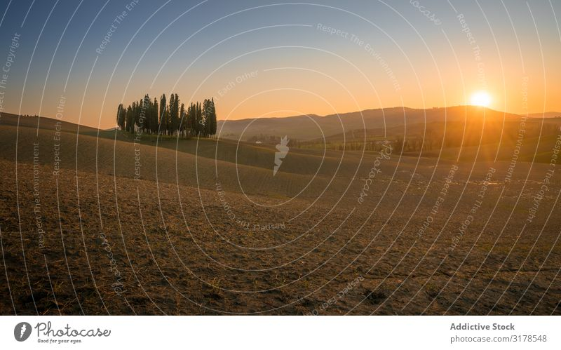 Small grove on empty dry field Field Sunset Italy Tree Tuscany Nature Landscape Summer Natural Organic Rural Environment Picturesque Farm Countries Idyll