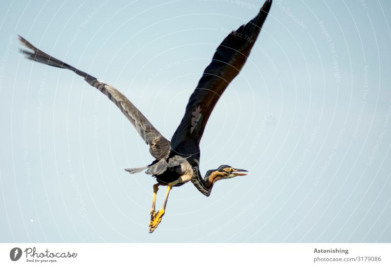 Sky Nature Blue Animal Travel photography Legs Yellow Environment Bird Flying Above Wild animal Large Wing Pelt Long