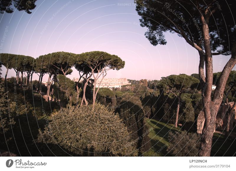 R O M. I Vacation & Travel Tourism Trip Summer vacation Nature Landscape Animal Tree Park Rome Italy Capital city Manmade structures Tourist Attraction Landmark