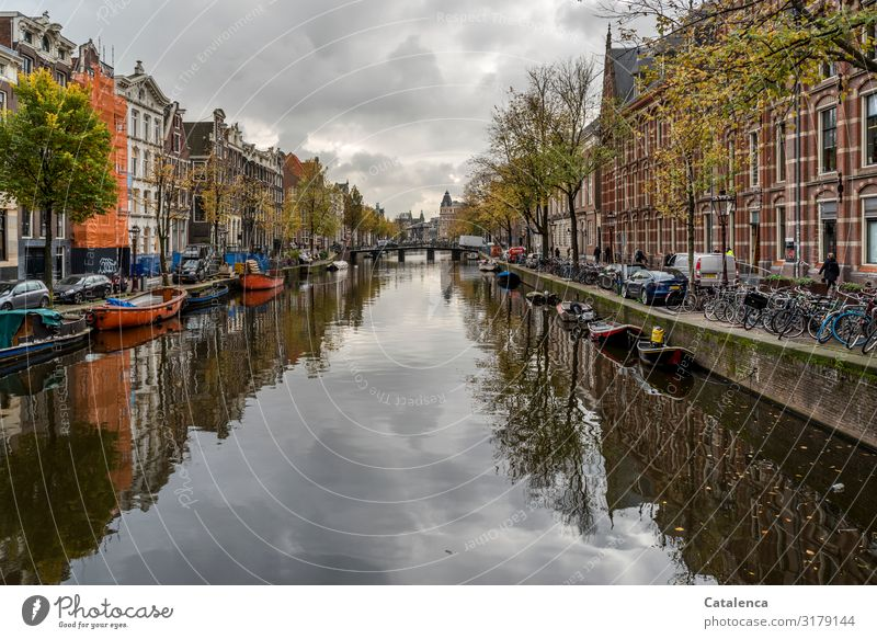 Architecture & Nature | when nature has to adapt Town Street built Manmade structures Facade Window House (Residential Structure) Wall (barrier) Old town Gracht