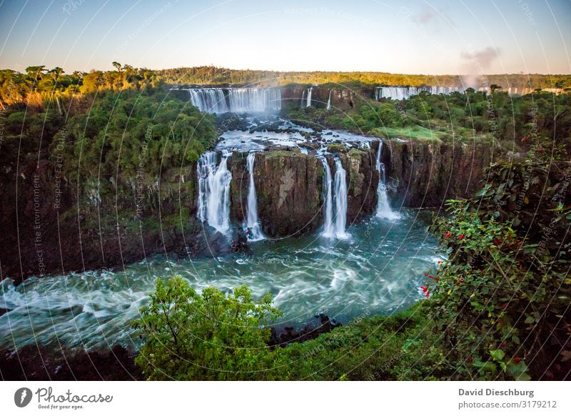 Iguazu Vacation & Travel Tourism Adventure Far-off places Expedition Nature Landscape Plant Animal Water Cloudless sky Beautiful weather Tree Virgin forest