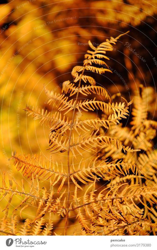 annealing Nature Plant Sunlight Autumn Bushes Fern Leaf Forest Authentic Hot Dry Incandescent Colour photo Exterior shot Close-up Detail Pattern