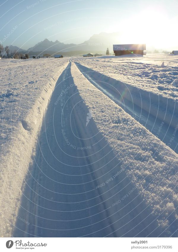 cross-country skiing pleasure... Sports Winter sports Cross country skiing Sporting Complex Cross-country ski trail Nature Beautiful weather Snow Alps Mountain