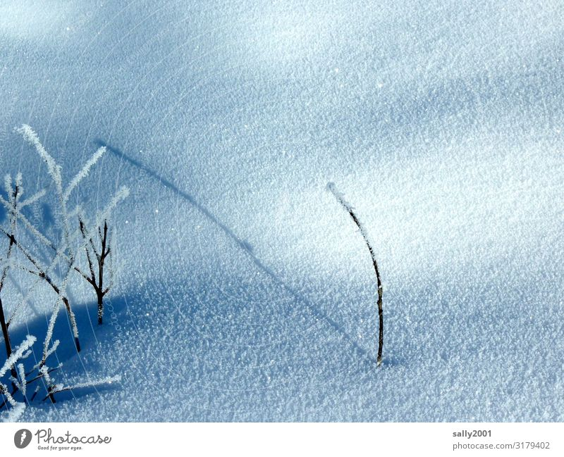 lone wolf Nature Plant Winter Ice Frost Snow Freeze Fight Stand To dry up Wait Cold Loneliness Pure Calm Stagnating Survive Individual Shadow Hoar frost