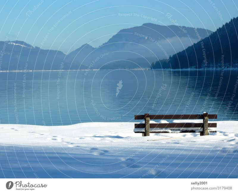 winter outlook... Landscape Cloudless sky Winter Beautiful weather Snow Alps Lakeside Lake Walchen Bench Observe Sit Free Bright Natural Loneliness Relaxation
