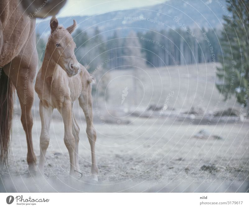 Mare and foal Environment Nature Landscape Spring Field Mountain Animal Farm animal Horse 2 Baby animal Safety Protection Safety (feeling of) Warm-heartedness