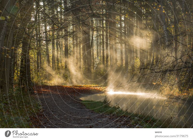 Fog rises on a sunny winter morning from a creek Winter Nature Forest Brook Wet Clean copy space dirt forest path forest road landscape morning crap morning sun