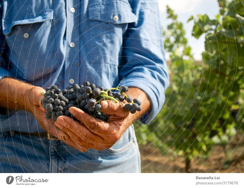 Man with grapes in his hands Food Fruit Italian Food Wine Lifestyle Summer Human being Adults Male senior Hand 1 60 years and older Senior citizen Nature