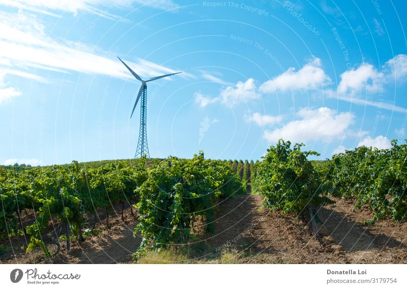 Wind turbine in the vineyards Summer Sun Agriculture Forestry Industry Energy industry Technology Advancement Future Renewable energy Wind energy plant