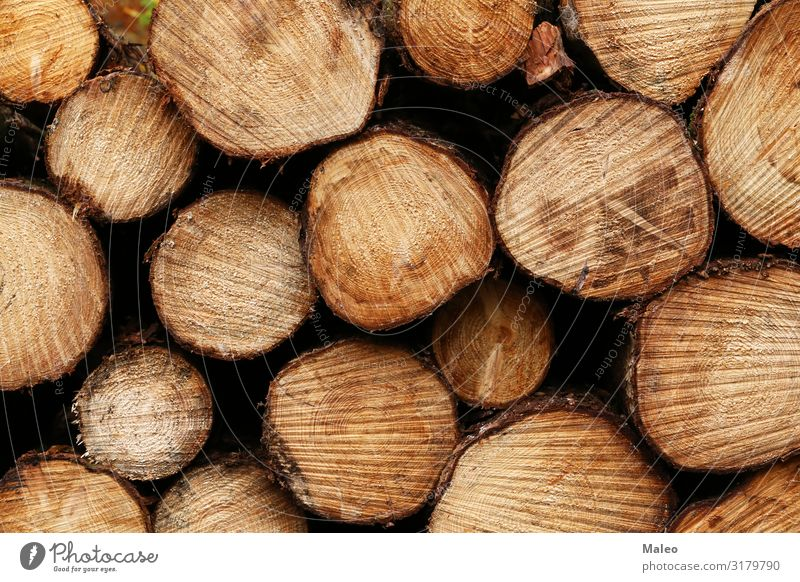 Freshly sawn logs lie in the forest Abstract Brown Average Firewood Forest Wood Material Nature Natural Stack Structures and shapes Tree Tree trunk