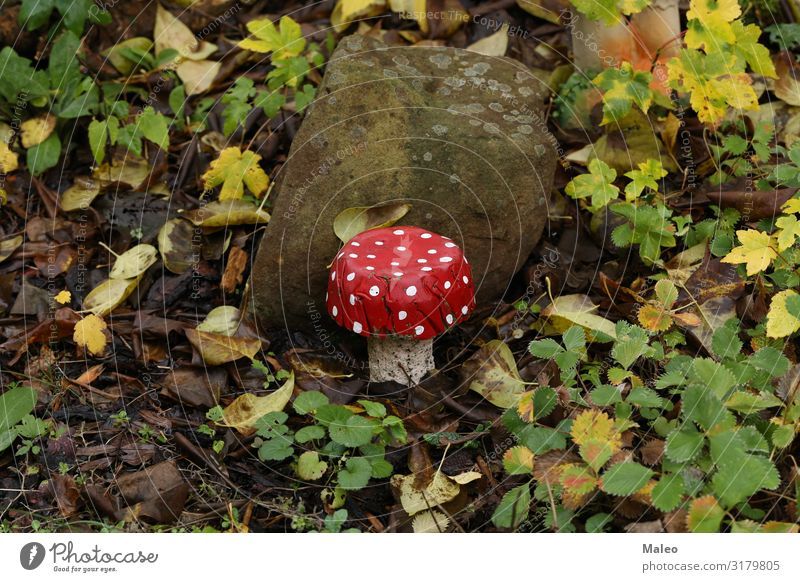 A concrete fly agaric Decoration House (Residential Structure) Mushroom Art Illustration Background picture Living or residing Things Beautiful Multicoloured