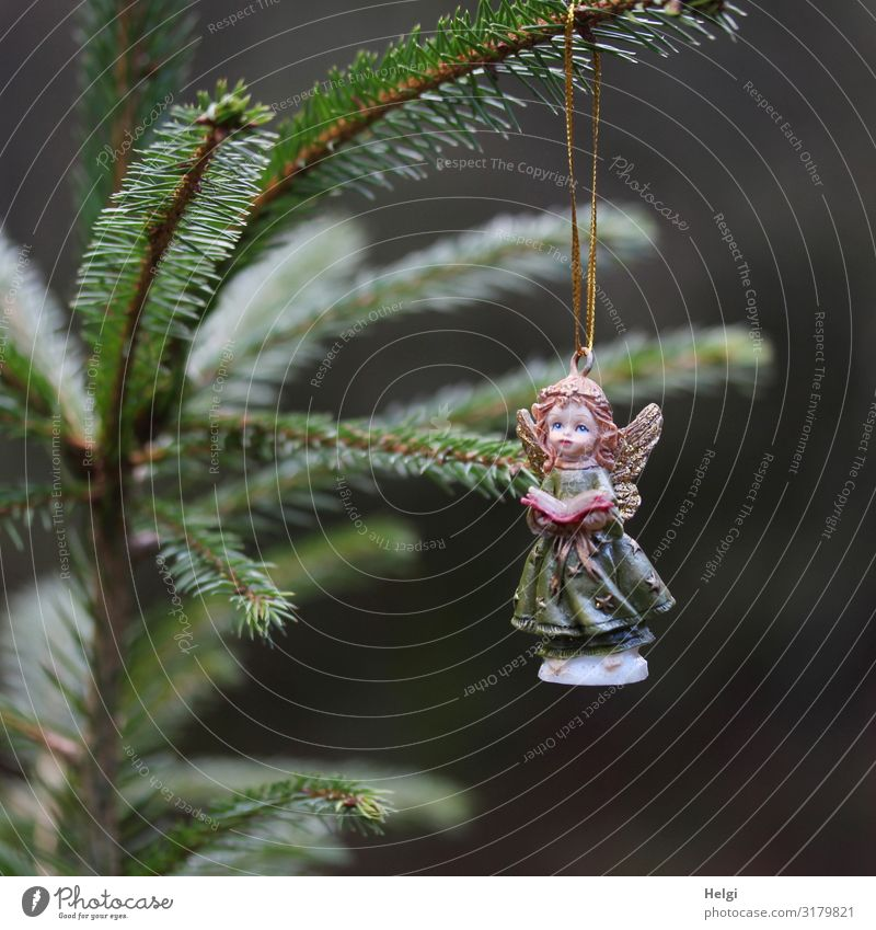 Porcelain angel hanging from a fir branch Feasts & Celebrations Christmas & Advent Tree Fir tree Fir branch Decoration Sign Angel Hang Esthetic Beautiful