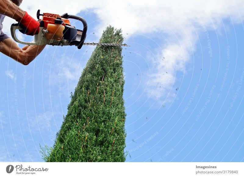 hedge trimming Work and employment Profession Craftsperson Gardener Craft (trade) Human being 1 30 - 45 years Adults Nature Sky Clouds Spring Autumn Plant Tree