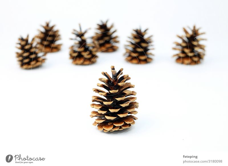 fir cones Decoration Christmas & Advent Plant Tree Brown White Fir cone Seed Background picture white background Depth of field Colour photo Copy Space top