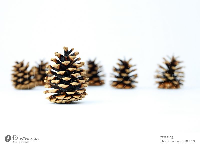 fir cones Handcrafts Knit Decoration Christmas & Advent Stockings Contentment Fir cone Wool photography Background picture Neutral Background White whiter Brown