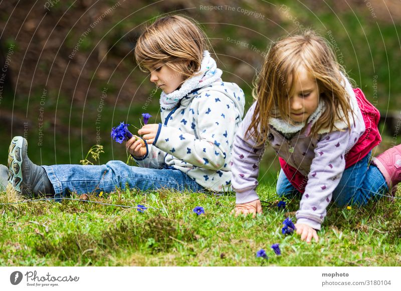 Pick gentian Vacation & Travel Trip Adventure Mountain Feminine Girl Brothers and sisters Sister Friendship Infancy 2 Human being 3 - 8 years Child Nature Plant