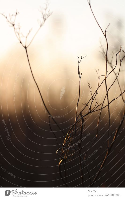 Nature Plant Calm Dark Autumn Environment Natural Meadow Grass Moody Chaos Whimsical Autumnal Bizarre November Knot