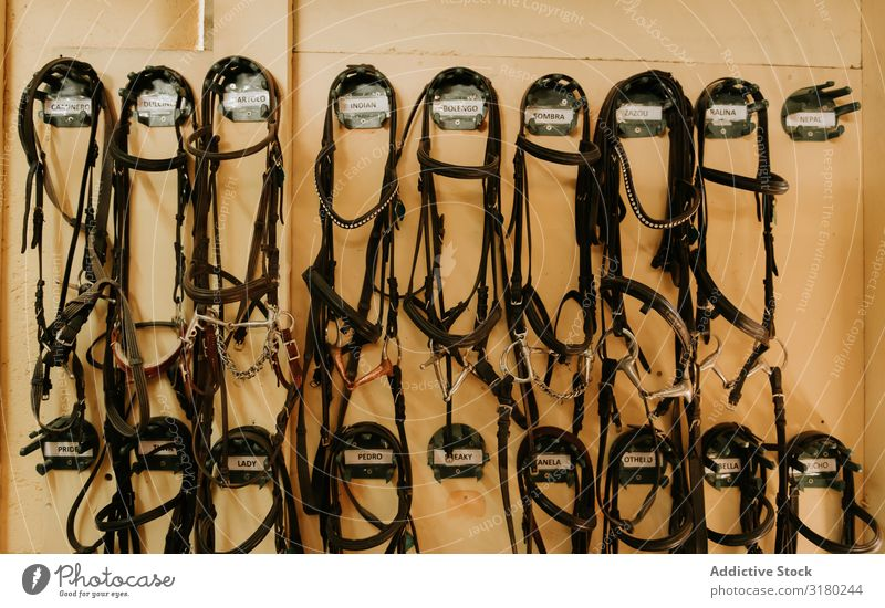 Set of bridles on wall Stable Hanging Wall (building) Horse Barn Equipment equine Leather Ranch harness Professional Leisure and hobbies Rustic Rural Row