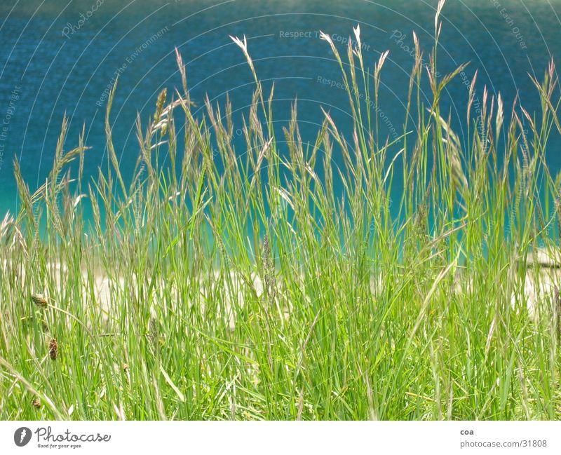 grass Grass Green Summer Fresh Water Coast Blue lake cauma
