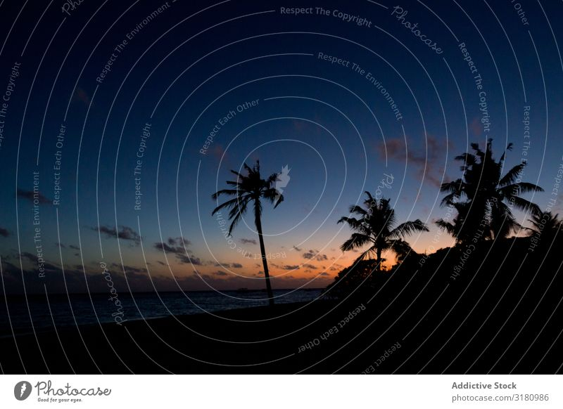 Silhouettes of palms against sunset sky on beach Palm of the hand Beach Sunset Ocean Sky Dark Tropical Paradise Tree Exotic Coast Water Clouds Evening Summer